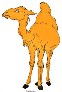 Camel Image Download