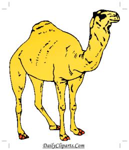 Desert Camel Picture