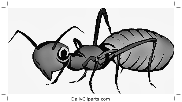 Ant Clipart Image